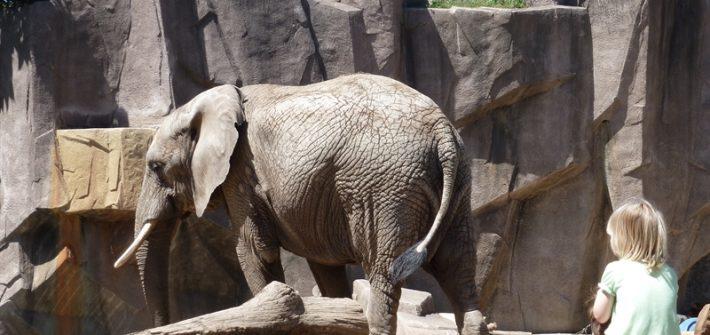 Milw zoo - elephants, Mama and Little Chick