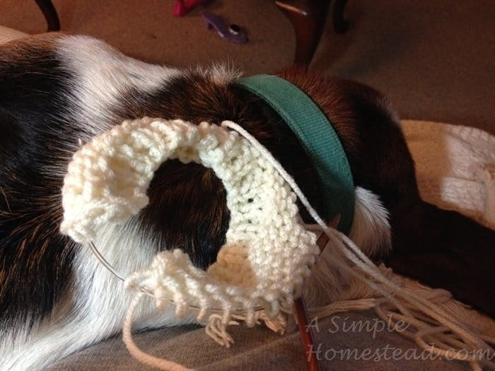 knitting with dog warming my lap