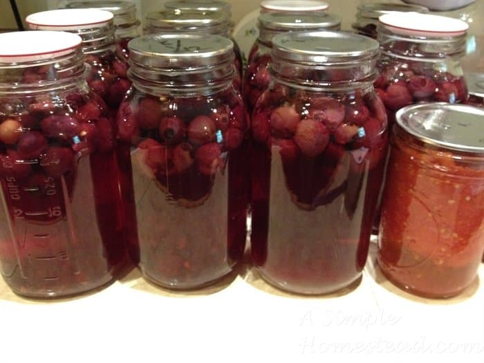 ASimpleHomestead.com - making grape juice