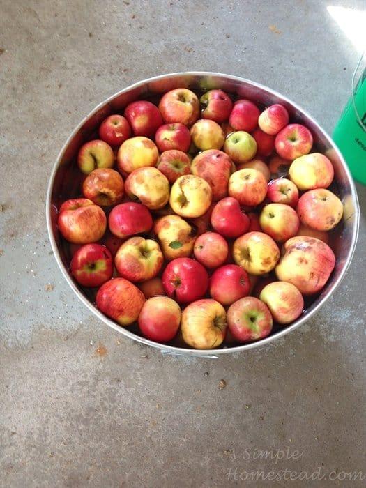 ASimpleHomestead.com - apples