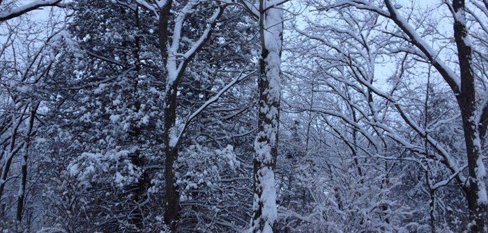 ASimpleHomestead.com - snowy trees