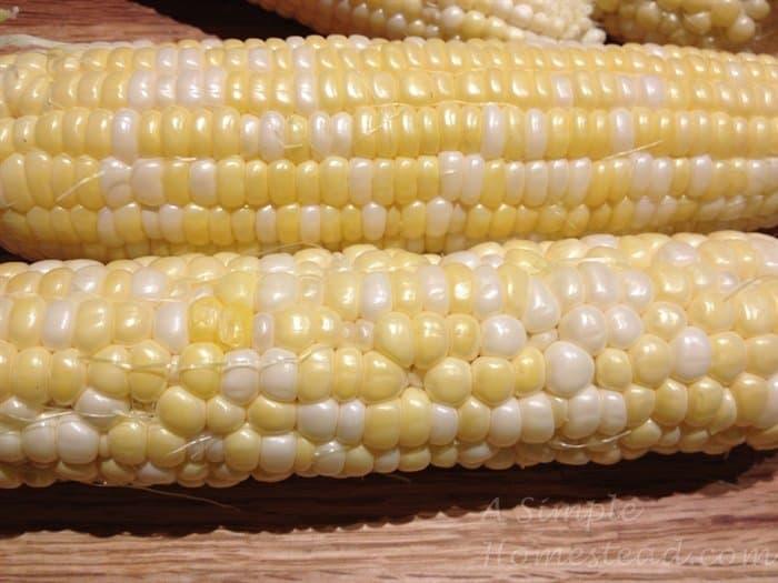 ASimpleHomestead.com - corn on cob closeup