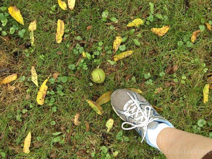 ASimpleHomestead.com - black walnut on ground