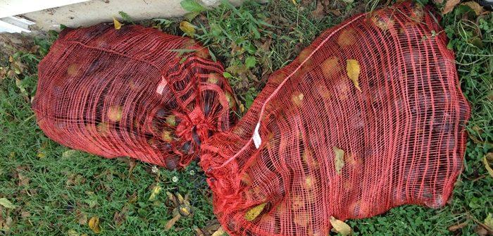 ASimpleHomestead.com - black walnuts bagged