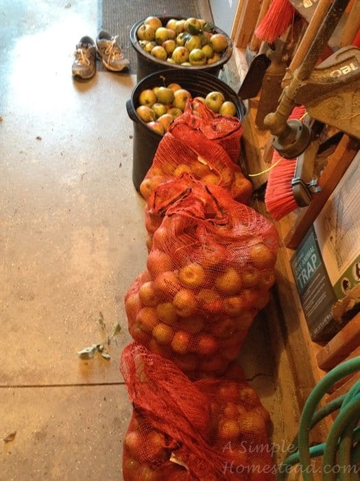 ASimpleHomestead.com - apples in bags