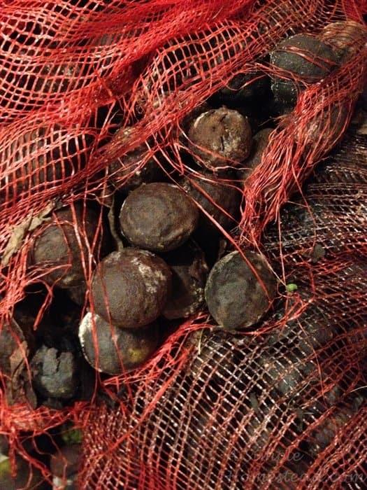 ASimpleHomestead.com - black walnut hulls closeup