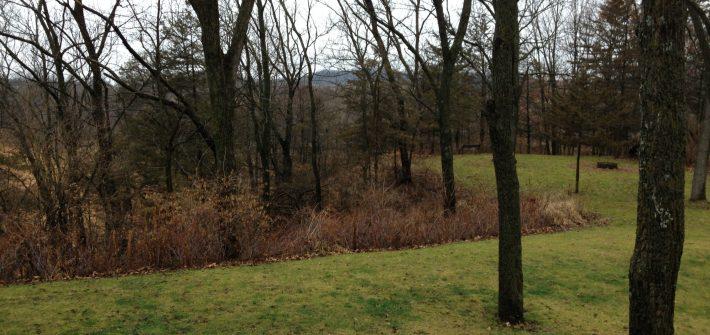ASimpleHomestead.com - green backyard in December