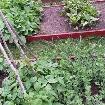 June garden | ASimpleHomestead.com