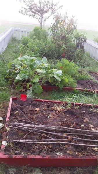 August garden | ASimpleHomestead.com