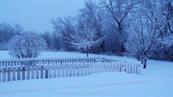 Jan 25 snowfall