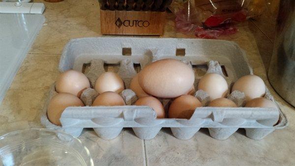 double-yolk egg