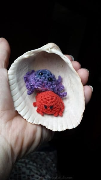 two crabs in a shell