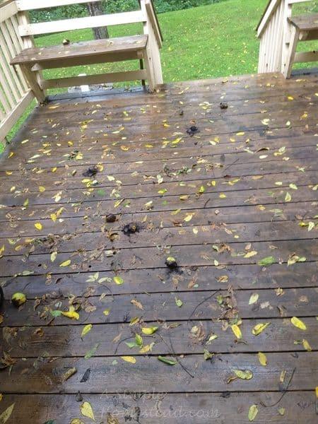 windstorm aftermath