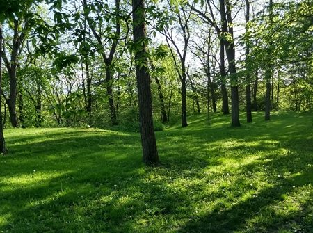 backyard with trees and green grass
