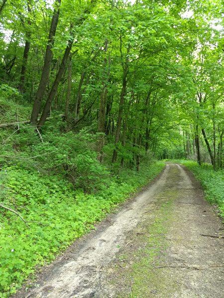 hiking trail at Cushon's Peak campground