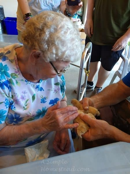 Grandma petting the chicks
