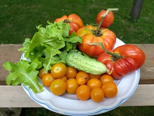 homestead update - garden produce