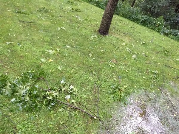 homestead update - storm of July 20, 2019 - messy yard