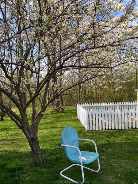 newly refinished metal chair under plum blossoms