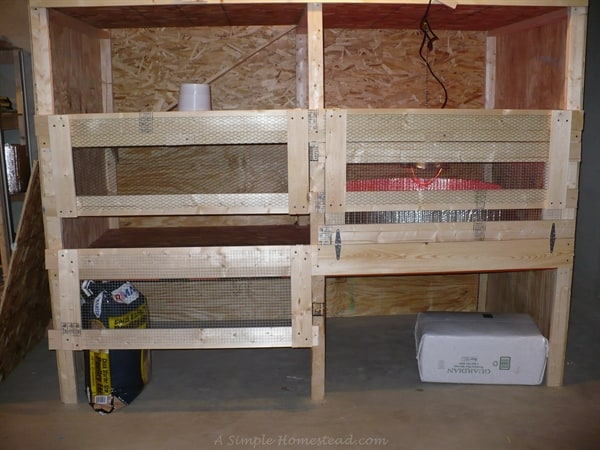 chicken coop in the house - temporarily in basement